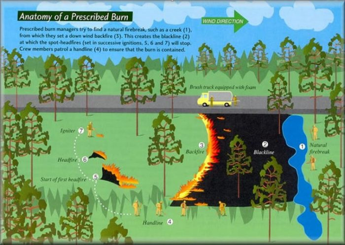 Forest Management and Wildfires