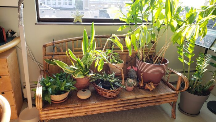 Want Clean Indoor Air? Don't Bank on Houseplants