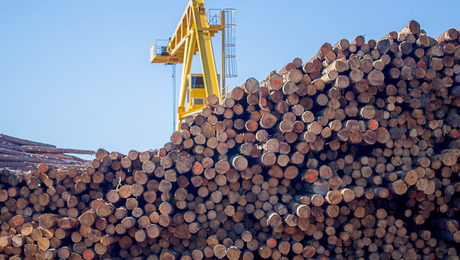 """New Group Promotes """"Climate-Smart"""" Wood"""