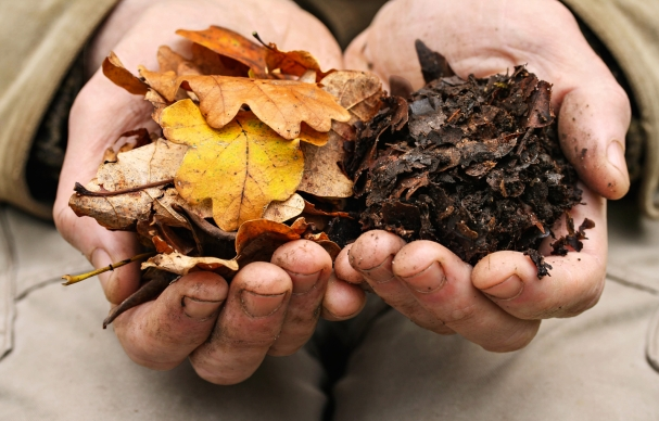 Leaf Mold is Gold