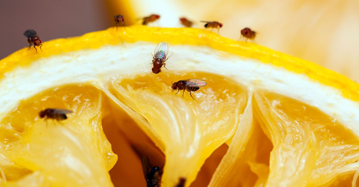 How to Get Rid of Gnats – 5 Ways