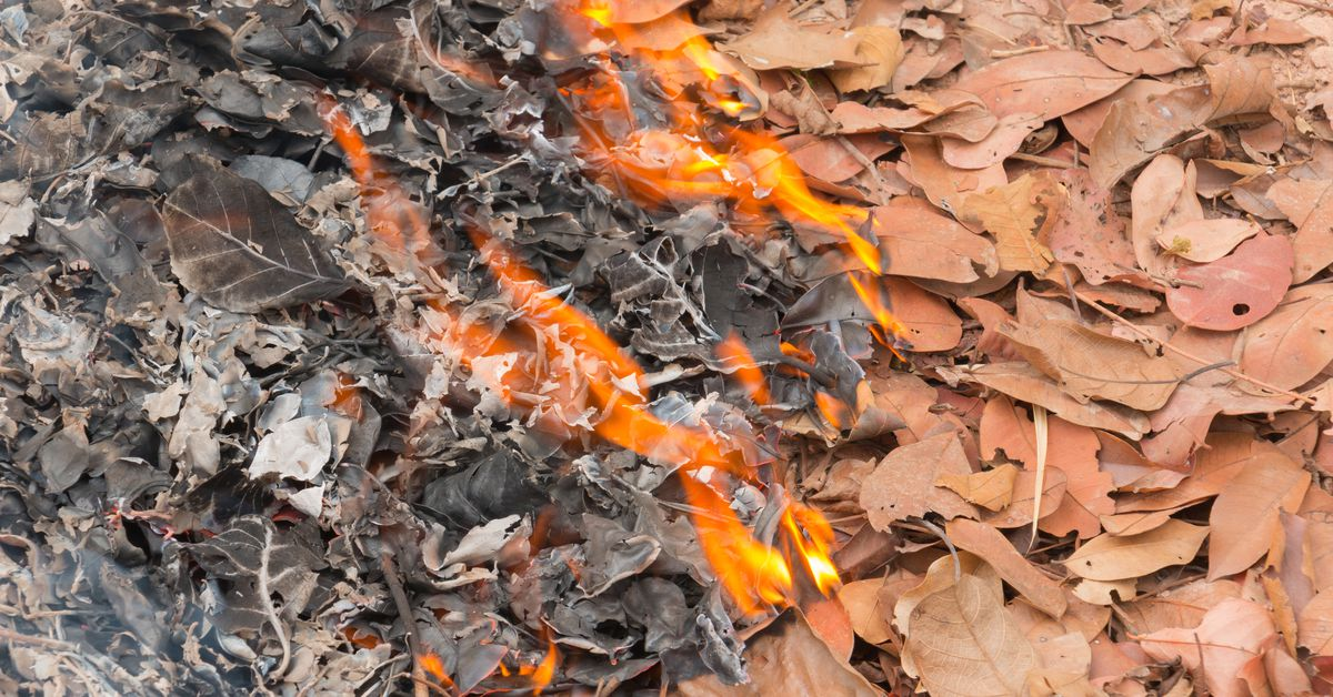All About Burning Leaves