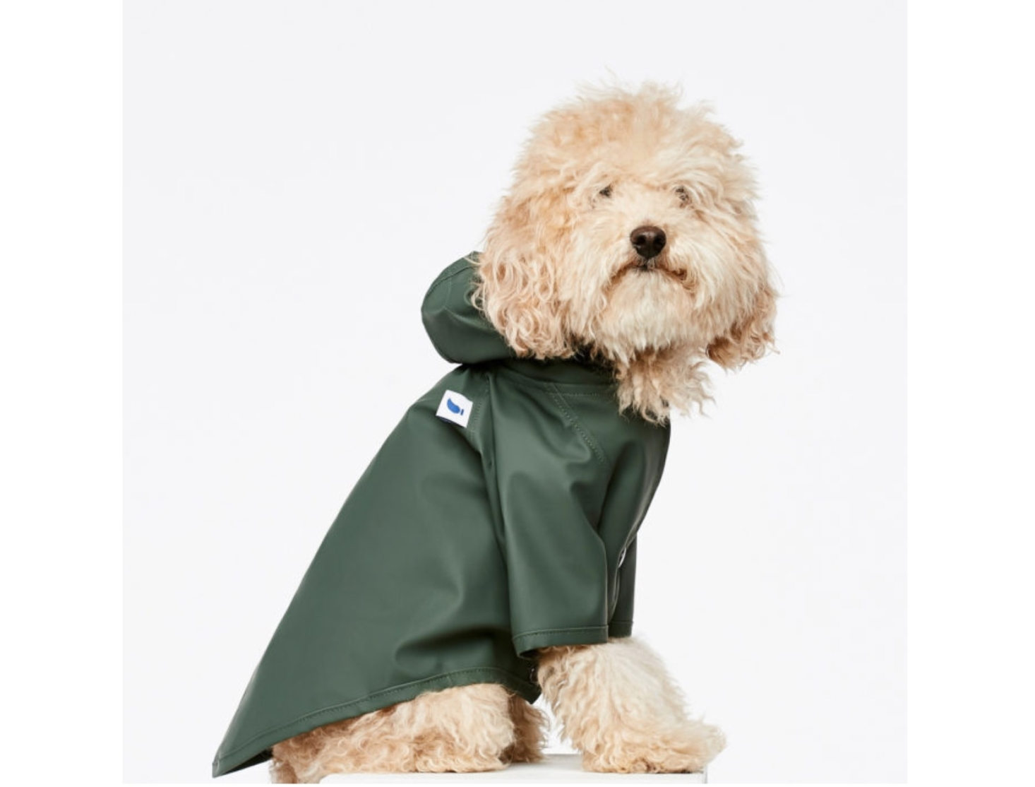 Holiday Gift Guide 2020: For Beloved Dogs & Cats