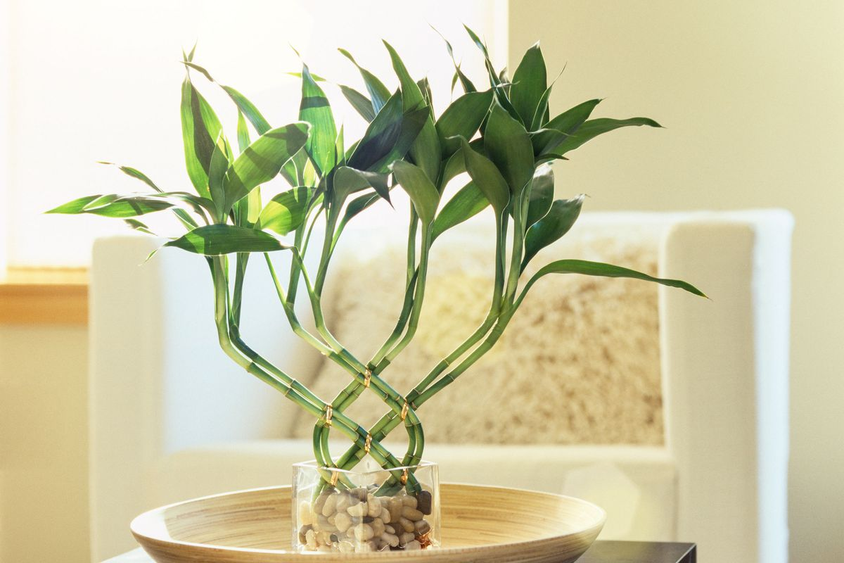 Low-Light Plants Great for Any Home